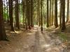 Lesom k Drábským světničkám
