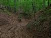 V lese cestou späť do Uhrovca
