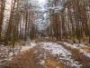 Cez borovicový lesík