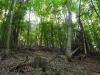 Lesom do Vyhieň