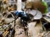 ...a ešte jeden chrobáčik