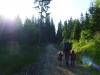Ráno vchádzame do lesa pri Polianke