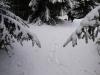 Lesom na Kremnický štít