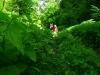 Cesta cez vegetáciu