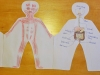 Prvouka: ľudské telo