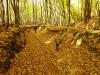 Lúky a lesíky