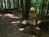 Gravitačné približovanie dreva
