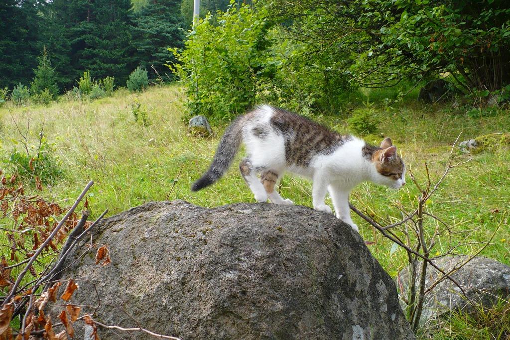 vysoká tesnej mačička