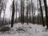 V lese nad Drozdovom