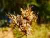 Cesta lesom k Panskému sedlu - zo života hmyzu