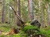 Les pod Žiarmi