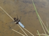 Zo života hmyzu: vážka