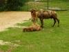 zoo Košice