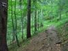 V lese nad Donovalmi